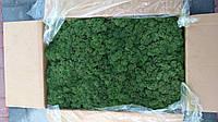Мох стабилизированный 54 moss green. Мох для декорації, стабілізований.
