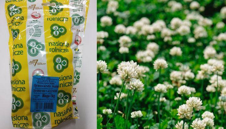 Семена Клевер белый низкорослый Huia (Хайа) 1кг Австралия, фото 2