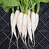 ДАЙКОН Микрозелень, семена зерна ДАЙКОНА органические для проращивания 15 грамм