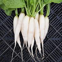 ДАЙКОН Микрозелень, семена зерна ДАЙКОНА органические для проращивания 15 грамм, фото 1
