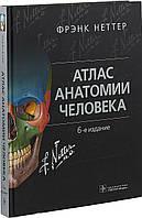 Атлас анатомии человека. Фрэнк Неттер. 6-е издание.