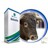 Насіння цукрового буряка Бакара категорія Фермер (дражоване, оброблене)