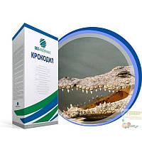 Насіння цукрового буряка Крокодил категорія Фермер (дражоване, оброблене)