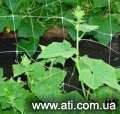 Шпалерная сетка Угорщина, огуречная яч. 170*150, 1,7*100м.п.