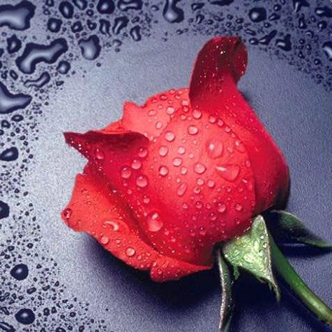 """Алмазна вишивка 22х24см - набір """"Червона троянда"""""""