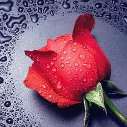 """Алмазная вышивка 22х24см - набор """"Красная роза"""""""