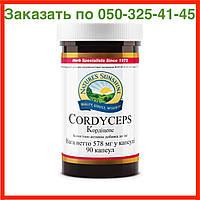 Cordyceps Кордицепс NSP. Натуральная БИОДОБАВКА, фото 1