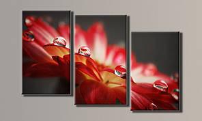 Модульная картина Капли на цветке 60х95 см (HAT-063)