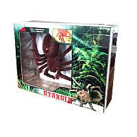 MZ пауки-птицееды на р / у, в кор.20 * 27,5 * 7 см