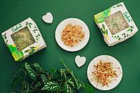 РОСТКИ  ПШЕНИЦЫ ПРОРОСТКИ Абонемент Sadove «Пшеничный Wellness»  микрогрин 800 грамм