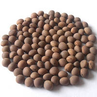 Вика яровая Ярославна сорт высокопроизводительный на кормовую массу и семена, упаковка 1 кг, фото 1