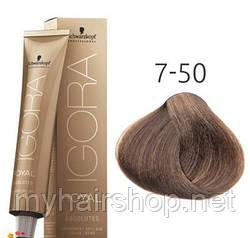 Стойкая краска для седых волос SCHWARZKOPF Igora Royal Absolutes 60 мл 7-50 Средний русый золотистый натуральный