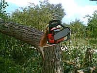 Расчистка участка от деревьев в Киеве и Киевской области, фото 1