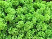 Cтабилизированный мох ягель для фитостен Зеленое Яблоко - 1кг (очищенный)