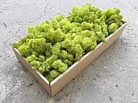 Стабилизированный мох ягель для фитостен Lime Green - 100 г (очищенный)