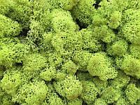 Стабилизированный мох ягель для фитостен Lime Green - 1кг( очищенный)