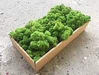 Cтабилизированный мох ягель для фитостен Лесной зеленый - 100 г (очищенный)