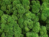 Cтабилизированный мох ягель для фитостен Лесной зеленый - 1 кг (очищенный)