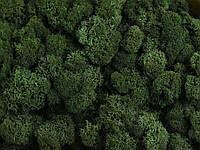 Стабилизированный мох ягель для фитостен Темно-зеленый - 1 кг (очищенный)