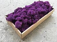 Стабилизированный мох ягель для фитостен Фиолетовый - 100 г