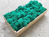 Стабилизированный мох ягель для фитостен Голубой с зеленым - 100 г