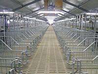 Строительство свиноферм под ключ и поставкой оборудование а, фото 1