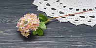 Цветок бульдонеж, фото 1