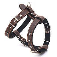 Шлея нагрудник для собак кожаная Боксер 2 коричневый, фото 1