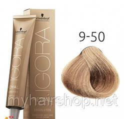 Стойкая краска для седых волос SCHWARZKOPF Igora Royal Absolutes 60 мл 9-50 Блондин золотистый натуральный