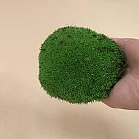 Стабилизированный мох кочки, фото 1