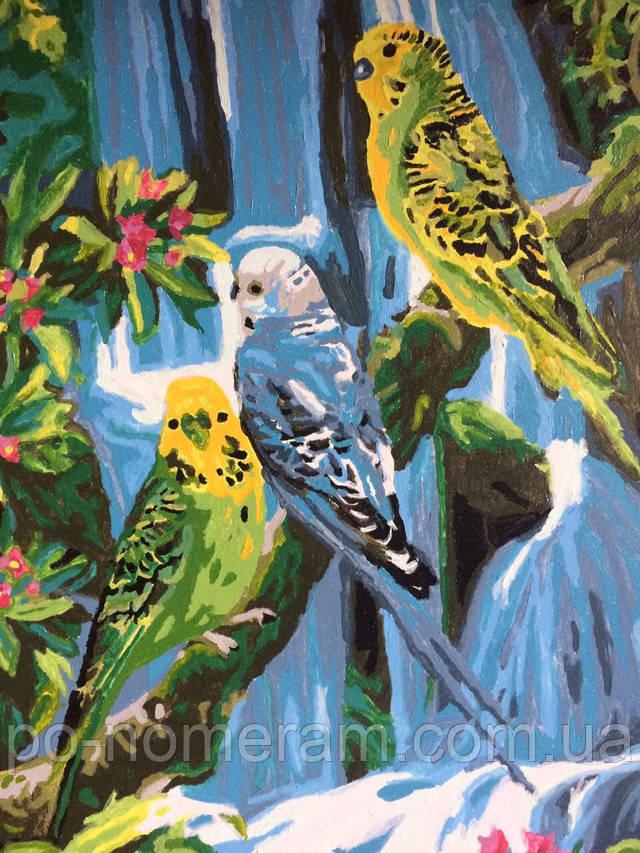 Раскраска по цифрам попугаи