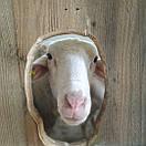 Сир бринза люта Закарпатська овеча 100г, фото 4