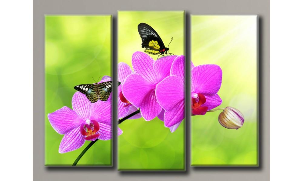 Модульная картина Бабочки на орхидеи 90х120 см (HAT-154)