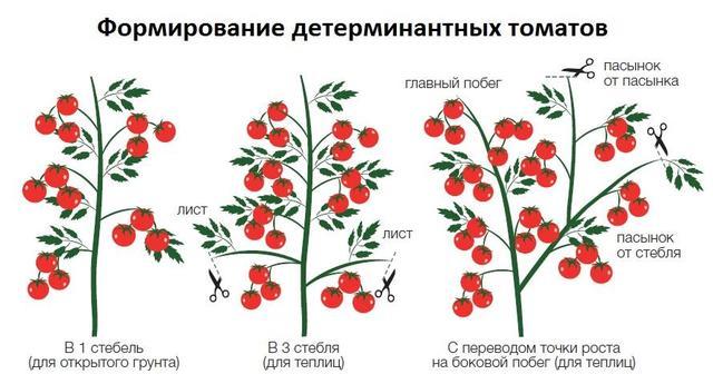 формирования кустов помидор