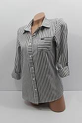 Женская рубашка в полоску хлопок с длинным рукавом оптом Турция