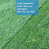 Белый клевер 1кг упаковка Пиполина Ривендел Юра Рома trifolium и др.сорта семена лилипут оптом для газона цена, фото 10
