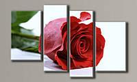 Модульная картина Красная роза-2 73х116 см (HAF-085)