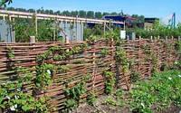 Декоративный плетеный забор, изготовление плетеных заборов украинского тына