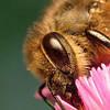 Пчелы разбираются в исскустве