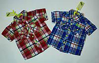 Стильная рубашка, шведка  для мальчика рост 134-152 cм