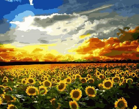 Картина за номерами Brushme Полі соняшник