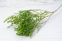 Сухоцвіт дрібний Кермек салатового кольору
