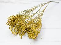 Сухоцвіт дрібний Кермек гірчичного кольору