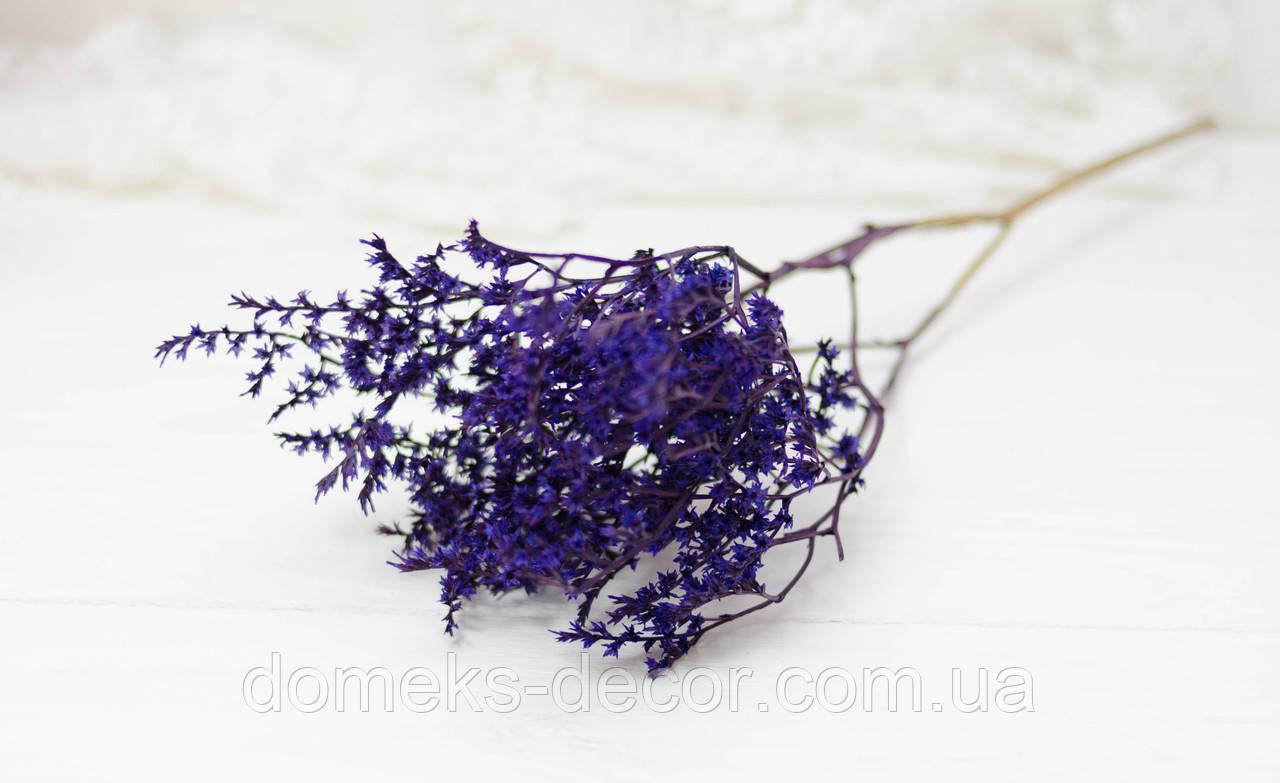 Сухоцвет мелкий Кермек сине-фиолетового цвета, фото 1