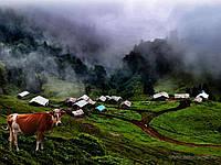Энерджи Про-энергетический витаминно-минеральный концентрат для коров