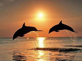 Алмазная вышивка Дельфины на закате