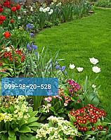 Газонные низкорослые  травы для ландшафтного дизайна 2019