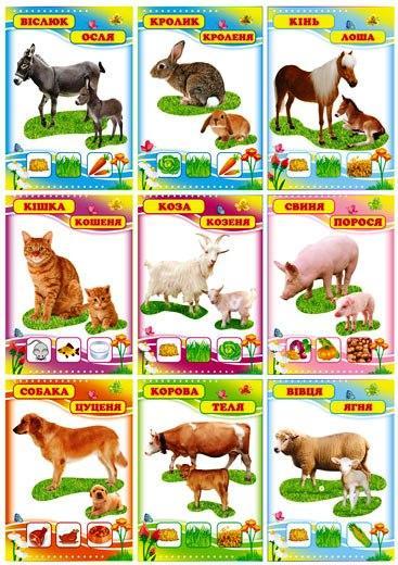 """Комплект карточек 9 шт. """"Домашні тварини"""" Км.-070"""