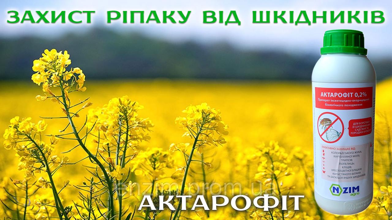 Захист ріпаку від шкідників - біофунгіцид Актарофіт ENZIM Agro
