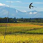 Динамический отпугиватель птиц КРУК+ труба и флагшток, фото 10